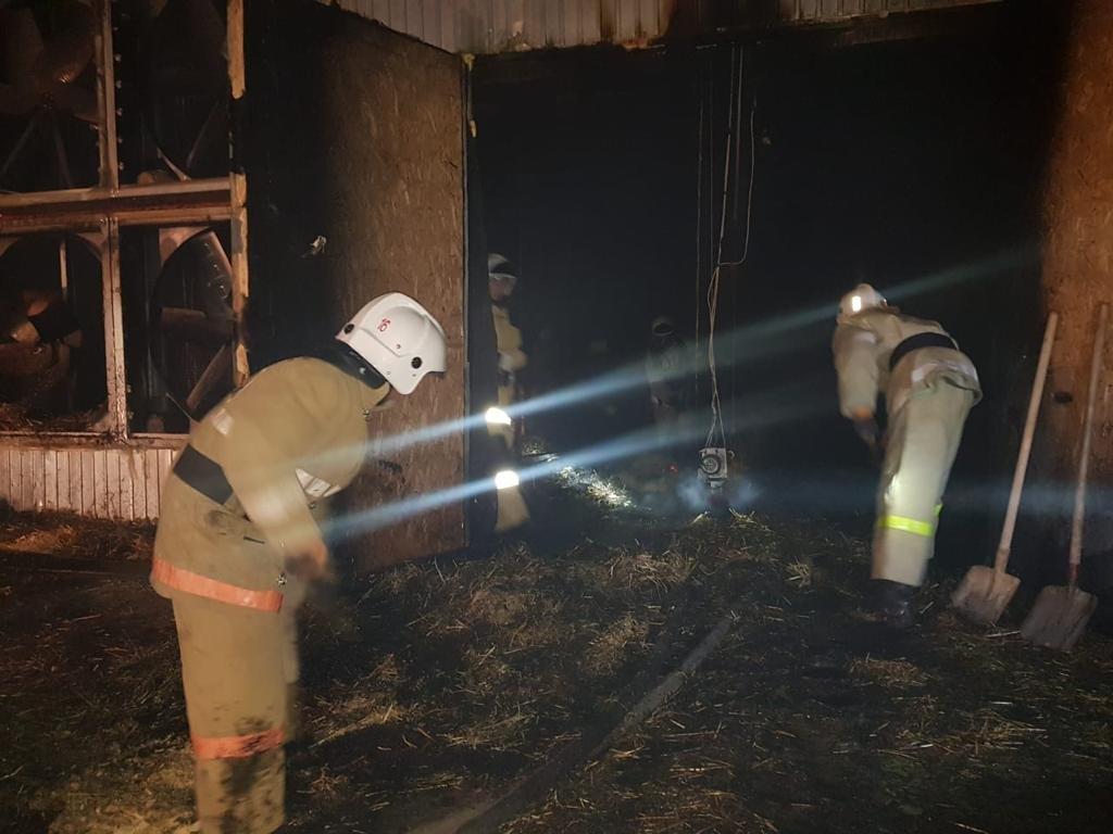 Три тысячи цыплят погибло в пожаре на птицефабрике Шымкента, фото-1, КЧС МВД РК